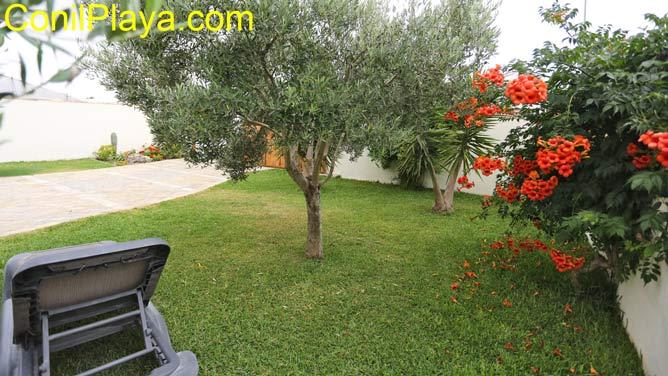 jardin con olivos y cesped