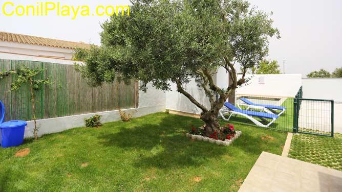 jardín con césped y olivo