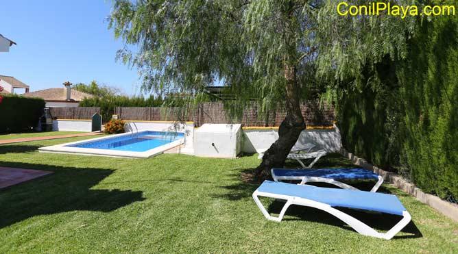 piscina y hamacas bajo arbol