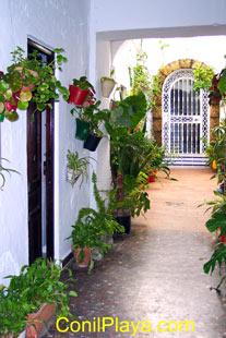 Patio adornado con macetas y plantas.