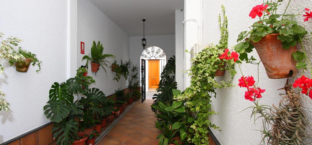 patio con maceta y flores