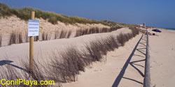 Duna protegida con empalizada. Captores pasivos de arena (juncos).
