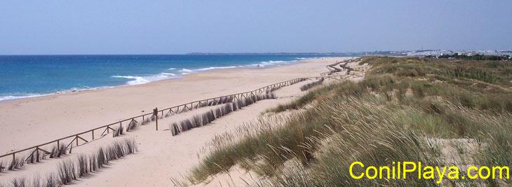 La playa de El Palmar, desde las dunas. Al fondo se encuentra Conil.
