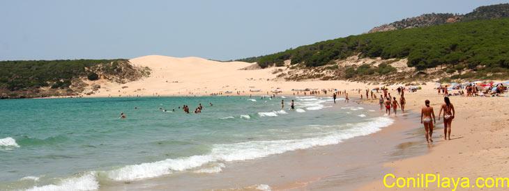 Playa de Bolonia, al fondo la duna, a la derecha el pinar. Finales de Julio de 2009.